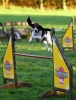 Dorotte Lady Alison a agility